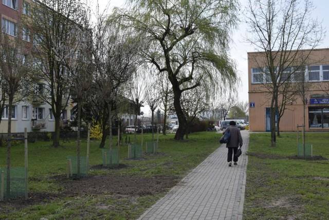 Skierniewicka Spółdzielnia Mieszkaniowe posadziła nowe drzewa w miejsce ściętych