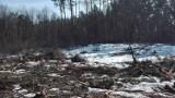 Mieszkańcy Białegostoku zaniepokojeni wycinką Lasu Wesołowskiego. Leśnicy twierdzą, że wszystko odbywa się zgodnie z planem [ZDJĘCIA]