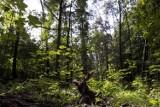 Wycinka prawie 300 drzew w Lesie Kabackim. Powód? Parking dla wojska. Radny: zrobię wszystko, aby do tego nie dopuścić