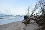W Rowach pusto i dziko. Plaża zniszczona przez sztorm (galeria zdjęć).