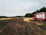 Pożar zboża we Wrzeszczewicach koło Łasku ZDJĘCIA