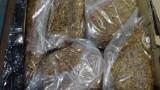 Mieszkaniec Międzyrzecza sprzedawał nielegalny tytoń. Przesyłki wytropił pies
