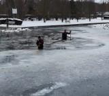 Łabędziom ze Szczecinka z odsieczą. Ptaki przymarzają do lodu [zdjęcia]