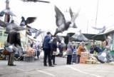 Policyjny dron latał nad targowiskiem przy ul. Owocowej w Zielonej Górze. Kontrolowano też, czy przepisów przestrzegają mieszkańcy Sulechowa