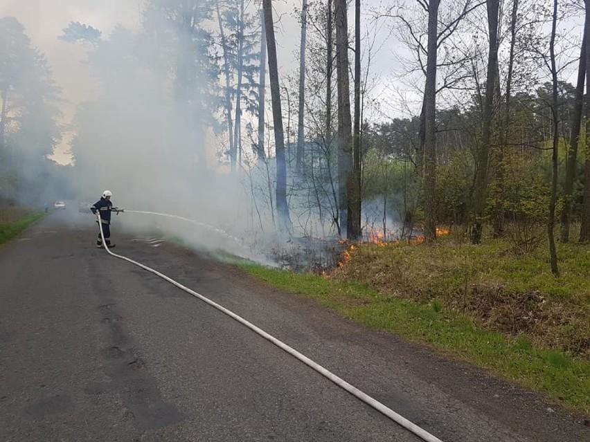 OSP: Pożar pod Zdunami w okolicach Ujazdu. Czy to kolejne podpalenie? [ZDJĘCIA]
