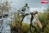 Wałbrzych: Wieje w całym regionie. Straż pożarna usuwała powalone drzewa.