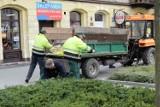 Prace pielęgnacyjne na placu Tadeusza Kościuszki