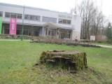 Wycinka drzew w Parku Akademickim? Nie ma się czego obawiać