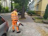 Na ulicach Opola znów pojawiły się dmuchawy. Ratusz: ich używanie jest zgodne z prawem