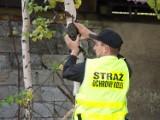 Fotopułapka zapobiegła kradzieży sieci trakcyjnej