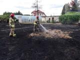 Rozpoczął się sezon wypalania traw. Jest to zabronione i bardzo niebezpieczne