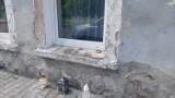Ta tragedia mogła się zdarzyć również w Żaganiu i okolicach! Nie żyje człowiek, a jego partnerce grozi nawet dożywocie!