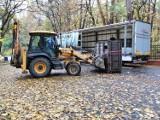 Gołuchowski żubr wyjechał do nowego domu. Zobaczcie jak wyglądał transport. ZDJĘCIA