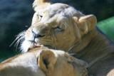 Drożeją bilety do zoo we Wrocławiu [cennik]