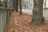 """Czytelnik skarży się na niesprzątnięte liście w centrum Lublina. """"To nie wygląda dobrze"""""""