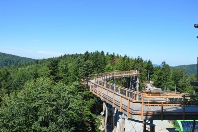 Pierwsza w Polsce ścieżka w koronach drzew powstała blisko dwa latat temu w Krynicy i stała się turystycznym hitem. Ciężkowicka trasa ma mierzyć ponad kilometr i zapewniać równie atrakcyjne widoki