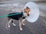 Toruń. Potrzebna pomoc dla psów z miejskiego schroniska. W internecie działa charytatywny bazarek