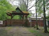 Pomysł na weekendowy spacer w okolicach Tomaszowa: Droga do żubrów przez Puszczę Pilicką [ZDJĘCIA]