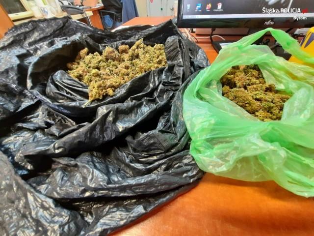 Bytom: ukrywał w mieszkaniu prawie 200 gramów marihuany. 20-latek usłyszał już zarzut