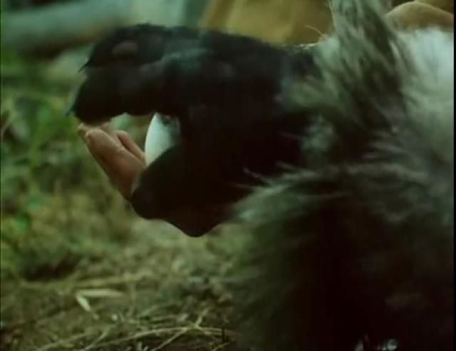 """""""Bliskie spotkania z wesołym diabłem"""" to historia o diable Piszczałce, który mieszka w okolicach Gór Piekielnych. Diabeł sieje postrach wśród okolicznych mieszkańców. Nie boi się go za to mały chłopiec, który zaprzyjaźnia się z Piszczałką. Nie wszyscy dorastający w latach 90. ten serial widzieli, niektórzy po prostu bali się diabła."""