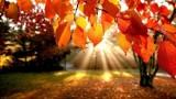 Przed nami polska złota jesień? Długoterminowa prognoza pogody!