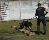 Jako jedyni w Polsce szkolą psy i ich przewodników dla więziennictwa [zdjęcia]