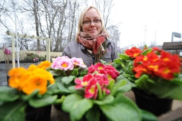 W weekend Monika Przybylska z centrum ogrodniczego przy Mieszka I sprzedała wiele prymulek