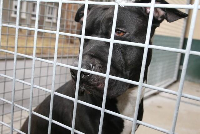 Pies trafił na obserwację do kliniki dla zwierząt przy ul. Głębokiej