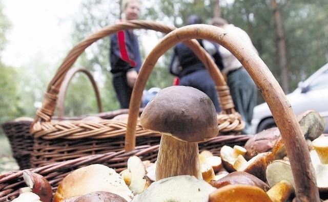 W Sanepidzie w Łodzi można zbadać grzyby.