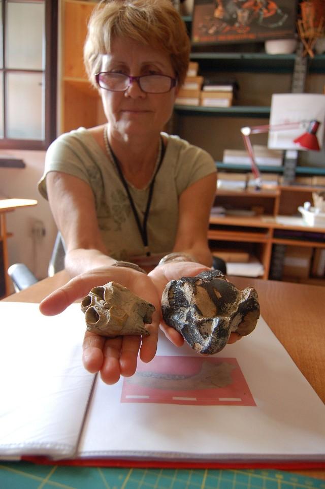 Barbara Szpunar prezentuje ząb i kość nosorożca