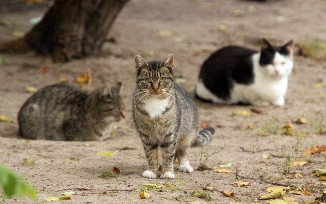 Władze Łodzi apelują o otwieranie piwnicznych okienek dla bezdomnych kotów.