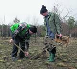 Kasa za zasadzenie lasu