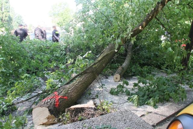 Pozwolenie na wycinkę drzew przy Piotrkowskiej było nieważne