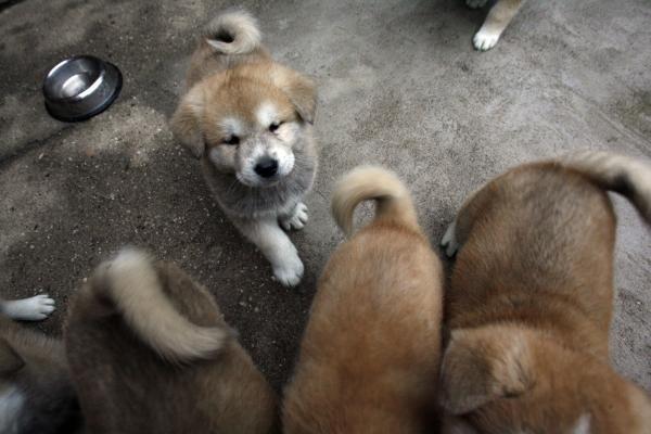 W internecie roi się od ofert, w których rasowe psy bez rodowodów są tylko dodatkiem do bardzo drogiej smyczy czy obroży