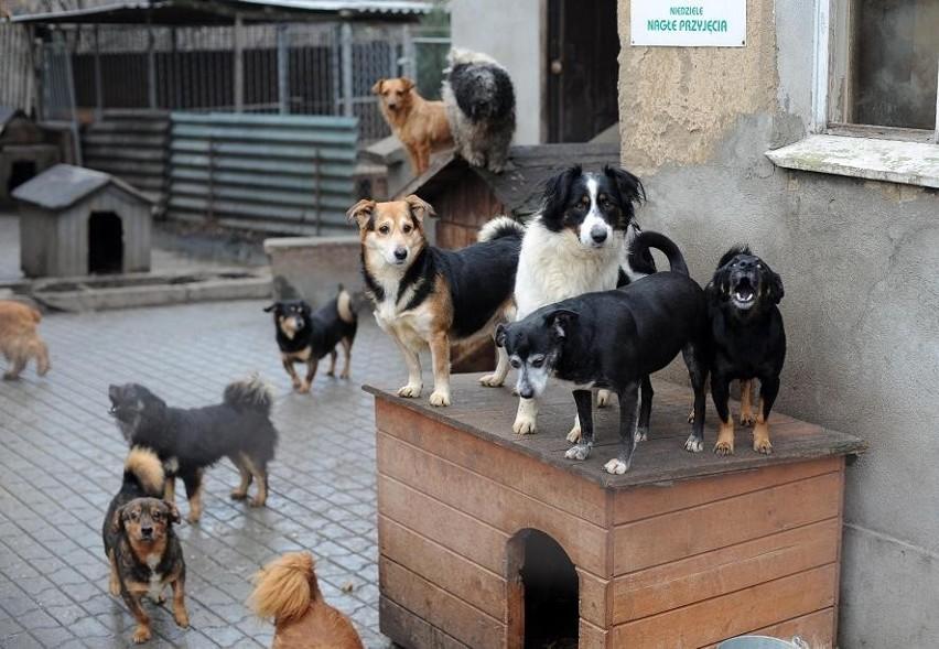 Mieszkańcy nie chcą przytuliska dla psów w okolicy swoich domów