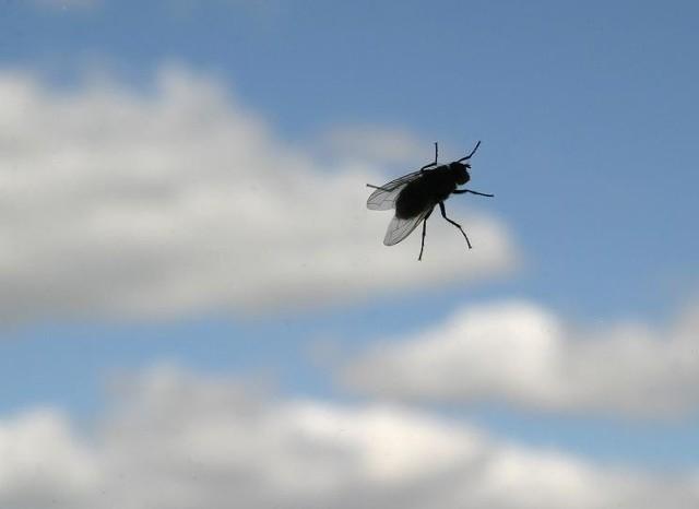 Komary, meszki czy muchy mogą popsuć nam dobre samopoczucie i uniemożliwić spokojny sen.