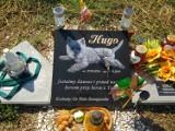 Niesamowite groby zwierząt. Zobacz jak wygląda cmentarz dla zwierząt niedaleko Białegostoku (ZDJĘCIA)