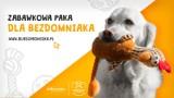 Akcje pomocy dla bezdomniaków z Fundacji Psi Azylek - Zwierzęta w Potrzebie w Podgrodziu