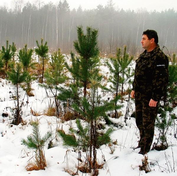 Leśniczy Andrzej Korkus sprzedał w tym roku wszystkie choinki w ciągu jednego dnia
