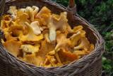 Sos z grzybów leśnych, suszonych, a może z kurek? Jak zrobić