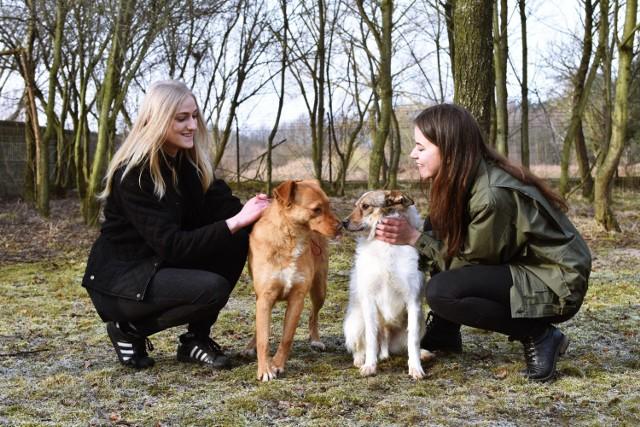 Zwierzaki z przytuliska Reksio w Brodnicy czekają na was, na pomoc i na nowy dom
