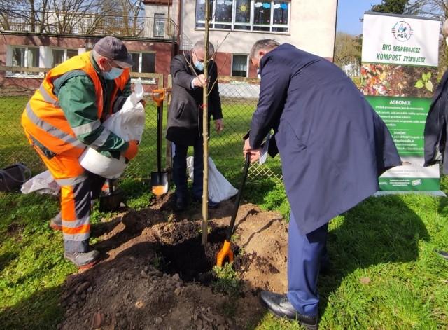 W Międzynarodowy Dzień Ziemi w Koszalinie sadzili drzewa
