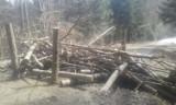 Ktoś zniszczył drogę do zagrody żubrów w Mucznem, trasa zamknięta dla turystów. Leśnicy Nadleśnictwa Stuposiany: to akt wandalizmu [ZDJĘCIA]