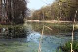 Puławy. Park Czartoryskich w wiosennej odsłonie. Zobacz zdjęcia