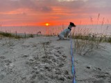 Zachody słońca w obiektywie mieszkańców Lublińca. Ale wspaniałe zdjęcia!