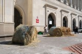Protest Agrounii w Warszawie. Zablokowali Ministerstwo Rolnictwa, rozstawili bele ze słomy