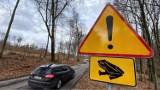 Żeby żaby nie ginęły na drogach. Leśnicy z Kłodawy dbają o ich bezpieczeństwo
