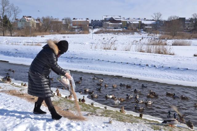 Joanna Dąbrowska dokarmia kaczki w Lipnie