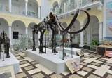 Warszawski mamut potrzebuje imienia. Muzeum Geologiczne ogłasza konkurs