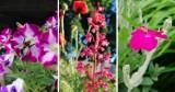 Lato w ogrodzie! Bujna zieleń i kwiaty mieniące się wszystkimi kolorami tęczy! [ZDJĘCIA]